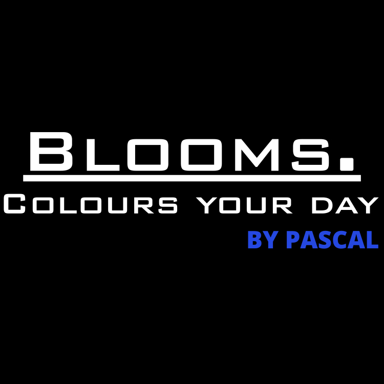 Blooms – colours your day
